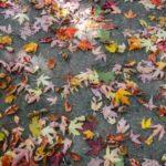 紅葉の季節!紅葉の楽しみ方は?私の過去の紅葉体験など